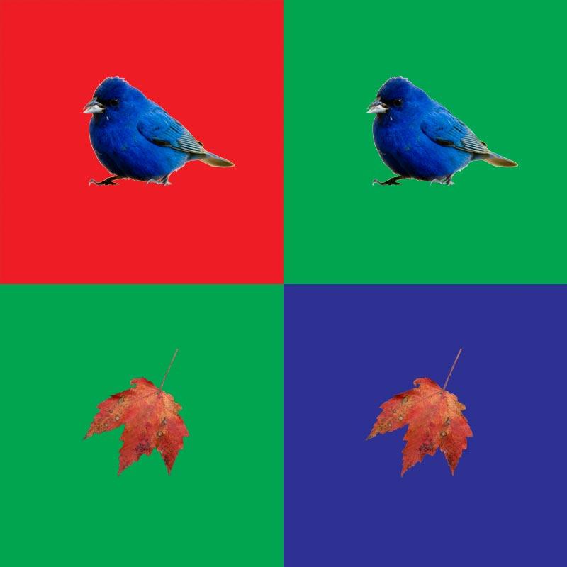 color_four.jpg