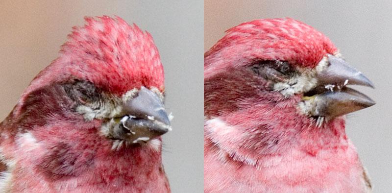 blindbird.jpg