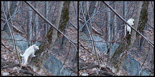 pands_treeclimbing