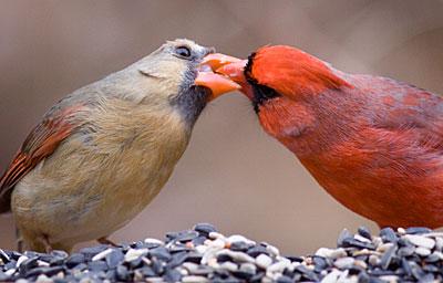 cardinal_pair