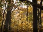 yellow_woods02