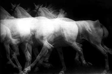 marey_horse