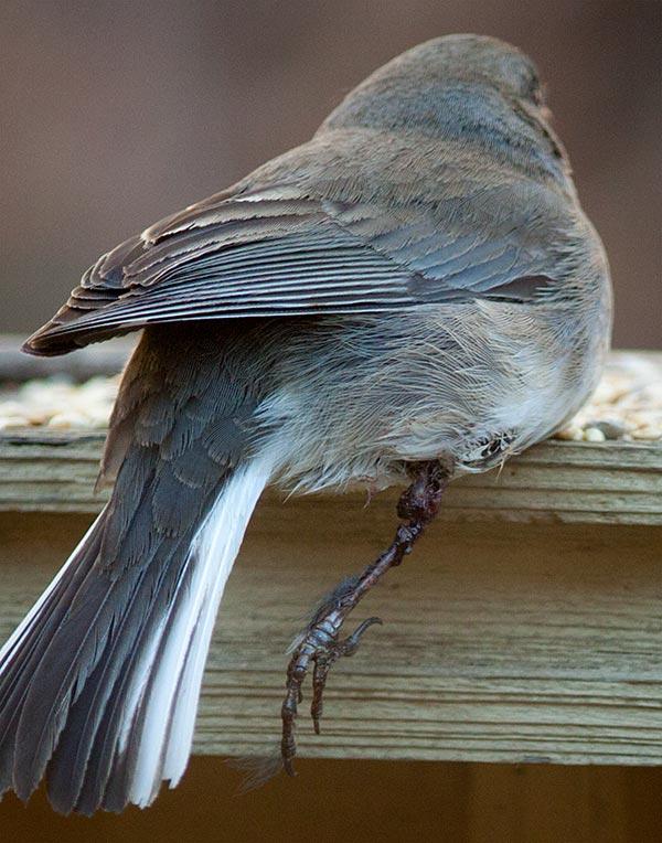 Bird_oneLeg01
