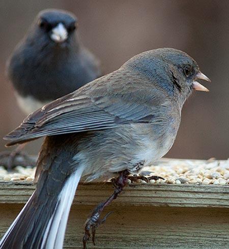 Bird_oneLeg03