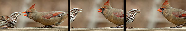 bird_blooper030613_03
