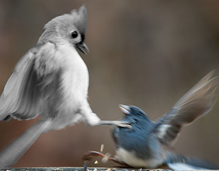 Is that a gray bird in color or a chunk of a black and white photograph stuck on top of a color photograph maybe we have a single medium with parts that