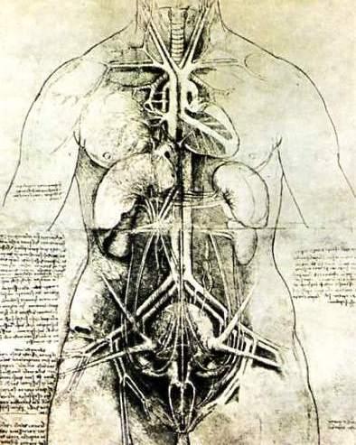 Leonardo_anatomical01