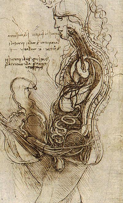Leonardo_anatomical02