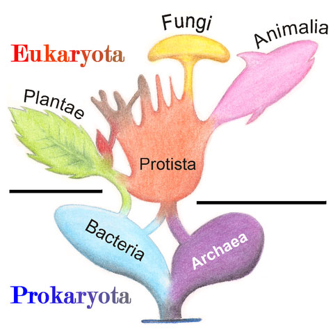 Tree_of_Living_Organisms