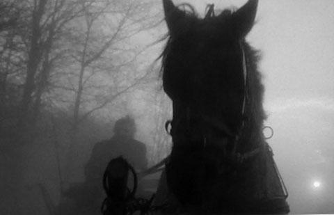 turin_horse_horse