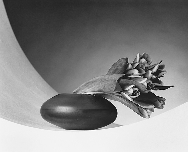 Mapplethorpe_tulips