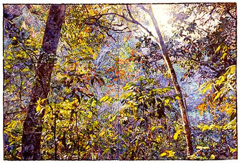 Raffael_friendship_forest2002